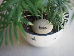 EnjoyStone (hannah.winge) Tags: plant home stone word happy peace natural houseplant happiness calm enjoy flowerpot fade boho simple decor planter chill mellow
