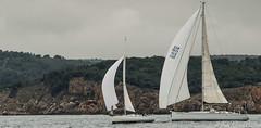 Club Nutic L'Escala - Puerto deportivo Costa Brava-12 (nauticescala) Tags: navegar costabrava regatas regata crucero comodor creuer velesdempuries