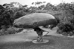 Edge of the World (Kent Holloway) Tags: au australia tasmania leicam6 recherche fujiacros100 summicron35mm