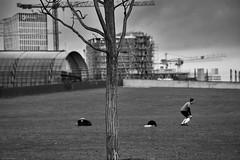 Berlin 5 (rainerneumann831) Tags: berlin blackwhite hauptbahnhof baum fusball spieler unschrfe schemen