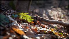 light (:: Blende 22 ::) Tags: trees winter light shadow sun fern forest germany deutschland licht spring hessen german vista wald bume lightshadow schatten ausblick naturpark meisner hessian werra frhblher heldrastein canoneos5dmarkii ef2470f28liiusm