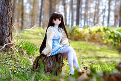 20164DDS02 (twinkle_077) Tags: doll pentax  ks2 dds dollfiedream    dds