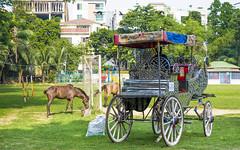 (ASaber91) Tags: new old horse carriage year dhaka bangladesh bengali banani pohela vaisakh boishakh pahela baishakh dohs