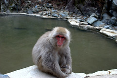 Poolside with the locals (Kyle Horner) Tags: japanesemacaque kanbayashi snowmonkeyresorts