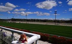 Leoncia en el Hipdromo de Madrid (Caty V. mazarias antoranz) Tags: madrid horses racetrack riders nwn apuestas racehorses jinetes adayattheraces enelhipdromo hipodromodelazarzuela undaenlascarreras sundayattheracetrack horsesinmadrid