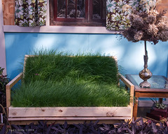 Lawn Bench ......HBM! (jackalope22) Tags: wood grass gardens bench botanical monday sod hbm