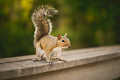 UCF Squirrel (Michael Mendonca) Tags: sunset sky people tree college window nature senior forest portraits campus lens fun happy 50mm orlando nikon squirrel colorful university place natural florida bokeh thing candid library pegasus union creative graduation sigma depthoffield celebration 24mm nikkor ucf studentunion universityofcentralflorida d810 f1f photographyclubucf cfearena ucfgraduation2016
