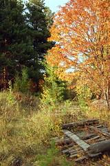 DSC_6061 (Rustam Bikbov) Tags: autumn september 2012    sverdlovskoblast