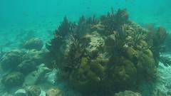 Snorkeling in Looe Key, FL - 4.30.16 (carissaconti) Tags: ocean fish keys florida tropical looe