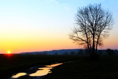 Early morning (LilyEinalem) Tags: morning sunset tree nature sunrise landscape dawn