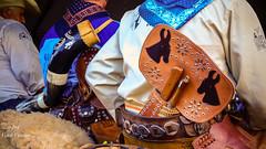 Encontro de Muladeiros (Vov Virso) Tags: encontro gois tradio peo berrante mulas ipor muares muladeiros