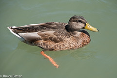 090813 Port Dalhousie-01.jpg (Bruce Batten) Tags: ca wild ontario canada birds animals trips stcatharines subjects locations occasions vertebrates businessresearchtrips