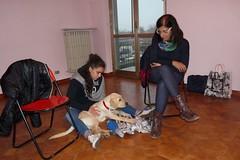 Tired (DanielOssino_EducatoreCinofilo) Tags: dog dogs cane puppy labrador room retriever class together tired insieme nanna cucciolo stanza cani cuccioli puppyclass stanco beddybye