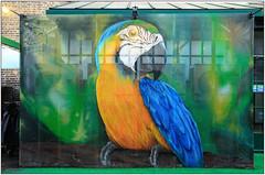 London Street Art (Mabacam) Tags: blue streetart bird london yellow wall graffiti stencil mural feathers parrot wallart urbanart shoreditch freehand publicart vibes macaw aerosolart spraycanart stencilling eastend 2016 urbanwall