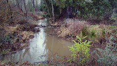 Get Outside (KurtClark) Tags: park creek stream state sammamish
