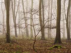 A New Hope (Damian_Ward) Tags: wood morning trees mist misty fog forest woodland photography chilterns buckinghamshire foggy bucks beech wendover astonhill thechilterns chilternhills wendoverwoods damianward ©damianward