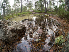Nacka (Daniel Turull) Tags: nature se meetup sweden hike naka saltsjbaden stockholmsln