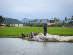 Local people fishing at a pond behind the paddy field. (Farishdzq) Tags: tourism field landscape evening fishing pond paddy malaysia langkawi