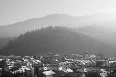 where I live ... (Kim S. Landgraf) Tags: city trees rooftop forest landscape kim olympus freiburg blackforest omd wiehre kimlandgraf