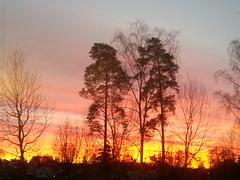 20160205_073314 En tidig vintermorgon frn arbetsplatsen (HAKANU) Tags: trees light colors sunrise fire dawn colours sweden smland vxj