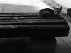 Varna (Noe_Kiddo) Tags: sofia ciudad viajes bulgaria gato animales balchik varna