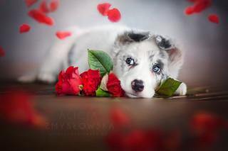 ♥ Happy Valentine's Day! ♥