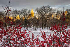 Winter Color (sevemiller) Tags: snow newyork nature