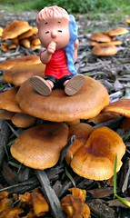 Linus on Mushrooms (John 3000) Tags: california nature mushrooms toys natureza peanuts linus snoopy cambria shrooms juguetes moonstonebeach cartooncharacter sanluisobispocounty securityblanket linusvanpelt