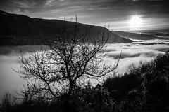 The tree above the fog (Kap_PH) Tags: tree fog sunrise nikon nebbia d600 rovereto folgaria