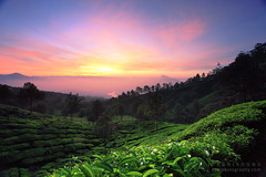 A dreamy sunrise from Suryanelly. (AgniMax) Tags: sunrise landscape tea kerala munnar teaestate chinnakanal suryanelli