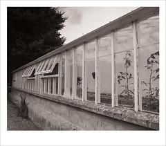 greenhouse (Nick Moys) Tags: building garden hall norfolk greenhouse national bronica trust ilford fp4 felbrigg etrsi moersch tanol