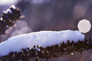 strange snow animal meets bokeh reflex (explored)