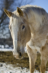 Light (Nix Alba) Tags: horses horse animal animals outdoors appaloosa blind outdoor equine equines