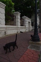 Cat, Bangkok, Thailand (ARNAUD_Z_VOYAGE) Tags: street city building art beach nature architecture landscape thailand asia state action country capital southern portion southeast peninsula region department indochina municipality indochinese