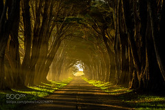 Morninig Lights In Tree Tunnel (viece.remmington) Tags: california morning station point coast photo monterey national cypress northern seashore rca reyes 500px ifttt