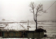 31-664 (ndpa / s. lundeen, archivist) Tags: winter house snow color building tree fall film home field rural 35mm snowy farm nick korea farmland korean seoul fields powerline thatchedroof 1970s southkorea 1972 31 dewolf thatchroof nickdewolf photographbynickdewolf reel31