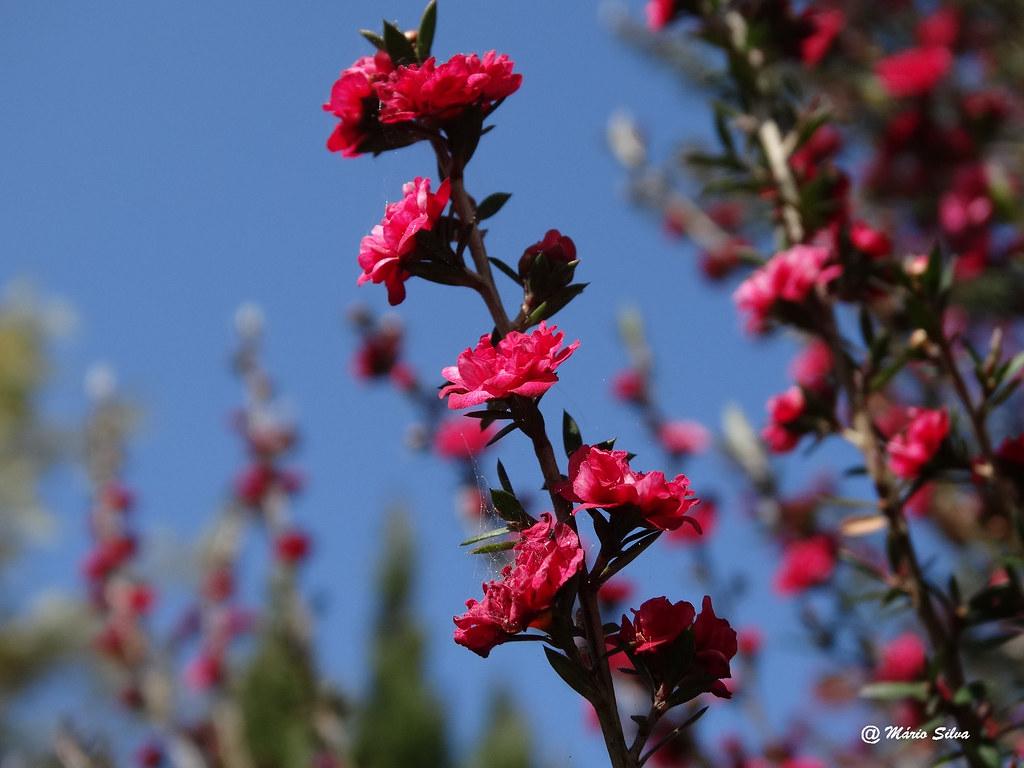 Águas Frias (Chaves) - ... Flores ...
