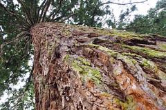 Tree Nature Nature_collection Wildlife & Nature EyeEm Nature Lover Non Urban Scene TreePorn (sinepix) Tags: tree nature wildlifenature treeporn nonurbanscene naturecollection eyeemnaturelover