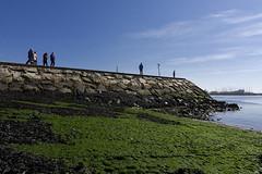 At ali! (Paulo Calafate) Tags: people seaweed green harbour seawall pvoadevarzim tokina1116mmf28atx116pro sonyilcea6000