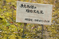20160229-103628_5K_80 (pya) Tags: kyoto  camellia plumblossoms jonangu     weepingplumblossoms