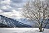 Tree of Life (ginevrachini) Tags: blue trees winter italy white snow tree nature colors landscape italu trentino valdinon