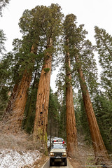 Sequoia NP.jpg (gaillard.galopere) Tags: park wood travel trees usa forest nationalpark big log unitedstates roadtrip explore foret sequoia discover 2016 decouverte hj61 gaillardgalopere