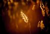 MIKE2817 (Michael William Thomas) Tags: sky sun ny newyork nature river landscape photography niagarafalls photo spring buffalo photographer westernnewyork mikethomas buffalonewyork michaelthomas mtphoto buffalowedding michaelwthomas