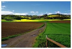 20160424-170808 (lichtschattenjaeger) Tags: yellow landscape gold diesel bio eifel gelb raps biodiesel vulkan getreide gerste weizen benzin hafer biosprit