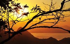 Rio... preciso te ver!! (Ruby Ferreira ®) Tags: trees sunset brazil brasil bay branches silhouettes pôrdosol árvores silhuetas baíadaguanabara