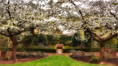 Sit and relax (Thank you for 4M+ views.) Tags: garden cherry spring blossom seat april malvern priory