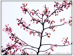 """Cherry blossoms give us memories full of joy."" (martian cat) Tags: japanesecherryblossoms yokohama japan ©martiancatinjapan allrightsreserved© ©allrightsreserved flower nature treeblossoms diamondclassphotographer martiancatinjapan© martiancatinjapan flickrdiamond ☺allrightsreserved cherryblossom allrightsreserved ☺martiancatinjapan martiancat"