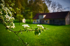 Spring is everywhere (CHCaptures) Tags: tree green apple spring dof bokeh grn blte apfelbaum frhling michaelnbach sonyilce7 sel2470z