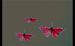 un deux trois (milomingo) Tags: pink blue red abstract texture crimson butterfly insect grey grain auburn frame slate ruby photoart carmine a~i~a amanranth