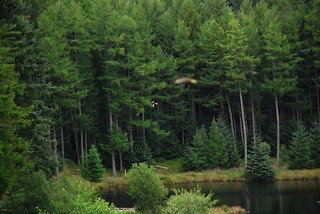 Wales, Ceredigion, Bwlch Nant yr Arian Red Kite Centre - Red Kites over lake
